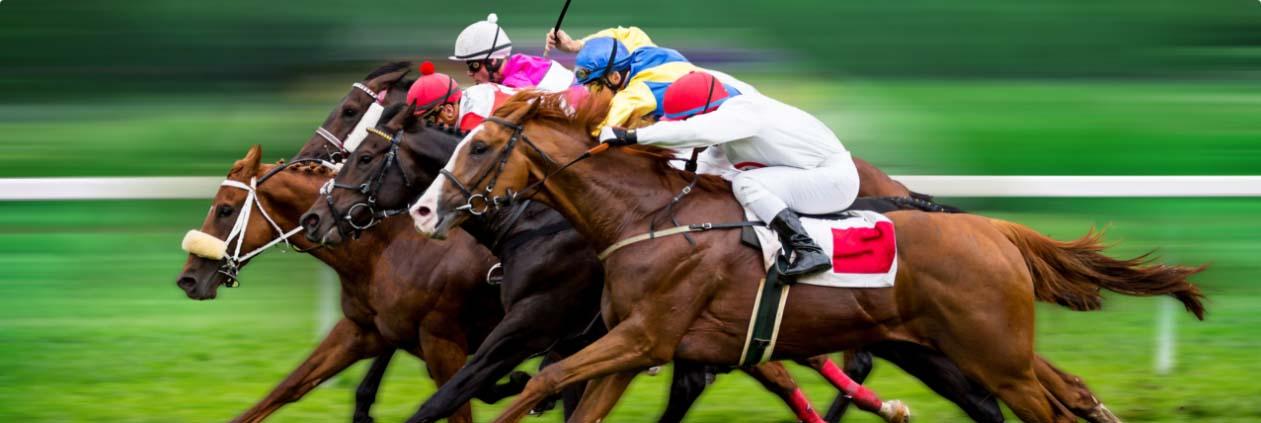 Canada horse racing betting rules 2005 honda crv sports review betting